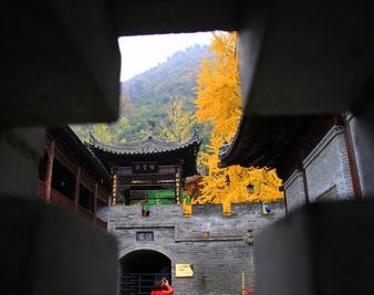 到觀音禪寺看秋季最